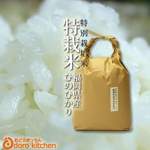 29年産福岡県産 たごもり農園の特別栽培米 ひのひかり5kg【定期購入も可】 「新鮮!玄米 白米 分つき米」[k]