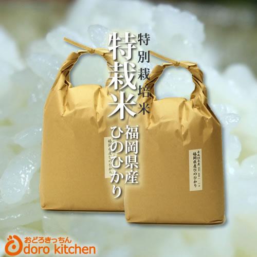 【あす楽対応】福岡県産 たごもり農園の特別栽培米 ひのひかり 平成29年産 10kg(5kg×2)【定期購入も可】 「新鮮!玄米 白米 分つき米」 [k][*]