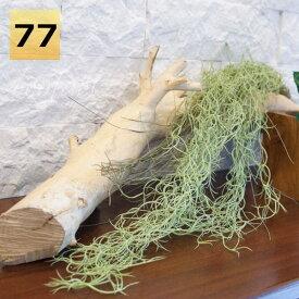 フェイクグリーン ハンギングブッシュ スパニッシュモス77cm エアプランツ 大型 壁掛け 人工観葉植物 おしゃれ ウォールアート 造花 壁面緑化 パネル ボード アートフレーム アレンジメント 飾り