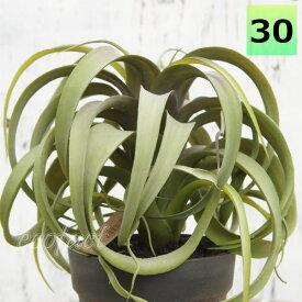 フェイクグリーン キセログラフィカ 30cm ポット エアプランツ チランジア 人工観葉植物 おしゃれ ウォールアート 造花 壁面緑化 パネル ボード アートフレーム アレンジメント 飾り