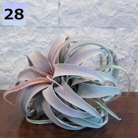 フェイクグリーン キセログラフィカ レッド 28cm ピック エアプランツ チランジア 人工観葉植物 おしゃれ ウォールアート 造花 壁面緑化 パネル ボード アートフレーム アレンジメント 飾り