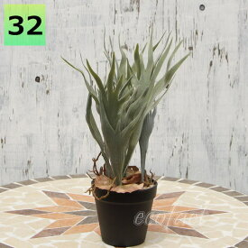 フェイクグリーン コウモリラン コロナリウム(ビカクシダ)32cm ポット 人工観葉植物 おしゃれ ウォールアート 造花 壁面緑化 パネル ボード アートフレーム アレンジメント 飾り