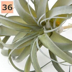 フェイクグリーン キセログラフィカ 36cm ピック エアプランツ チランジア 人工観葉植物 おしゃれ ウォールアート 造花 壁面緑化 パネル ボード アートフレーム アレンジメント 飾り