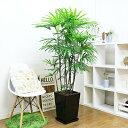 写真のような厳選品をお届け【シュロチク/h160cm前後】陶器鉢仕立 花 ガーデン DIY 観葉植物 棕櫚竹 日陰・寒さに強い おすすめインテ…