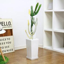 【送料無料・現品】ユーフォルビア・ホワイトゴースト/h85cm 陶器鉢仕立 希少種 育て易い 多肉植物 Euphorbia lactea White Ghost 多肉植物 バンザイ さぼてん サボテン インテリア