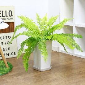 観葉植物 貴重な斑入り ボストンファン(ライムグリーン)/h55cm 陶器鉢仕立 Nephrolepis exaltata 'Bostoniensis' ボストンファーン 現品 条件付送料無料