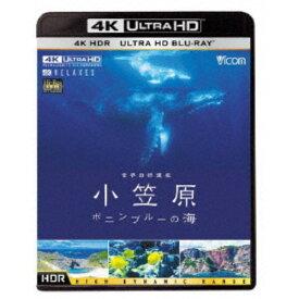 世界自然遺産 小笠原 〜ボニンブルーの海〜 UltraHD《UHDBD ※専用プレーヤーが必要です》 【Blu-ray】