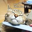 ねこじゃすりキャットグルーマーワタオカ猫用品(ネコ猫用ヤスリやすりブラシマッサージ国産日本製)(メール便送料無料)