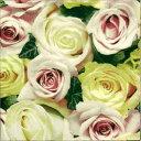 【手芸用品】【15:00迄の注文は当日発送】【デコパージュ】 ペーパーナフキン 薔薇の詩