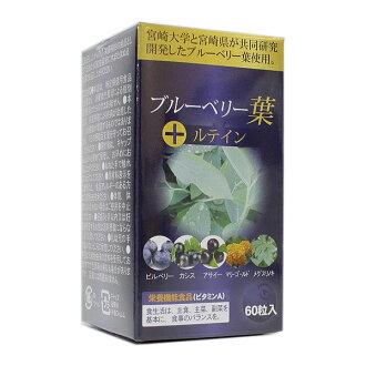 Miyazaki University and Miyazaki collaborate it! 60 blueberry leaf lutein