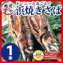 浜焼き さば 1尾【冷凍】4本以上 送料無料 鯖/サバ