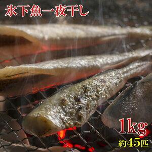楽天ランキング1位 北海道産 こまい一夜干しの干物 1kg 45匹前後 業務用サイズ お徳用 冷凍
