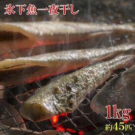 北海道産 こまい一夜干しの干物 1kg 45匹前後 業務用サイズ お徳用 冷凍 楽天ランキング1位