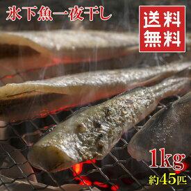 北海道産 こまい一夜干しの干物 1kg 45匹前後 業務用サイズ お徳用 冷凍 送料無料 楽天ランキング1位