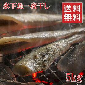 北海道産 こまい一夜干しの干物 5kg 225匹前後 業務用サイズ お徳用 冷凍 送料無料 楽天ランキング1位
