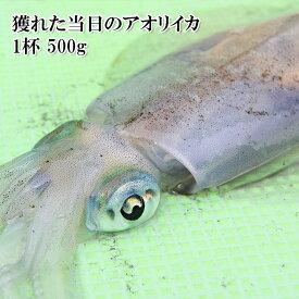鹿児島県産 生食用 獲れたて瞬間冷凍 生アオリイカ 500g 冷凍【どれでも5商品以上購入で送料無料(一部地域除く)】