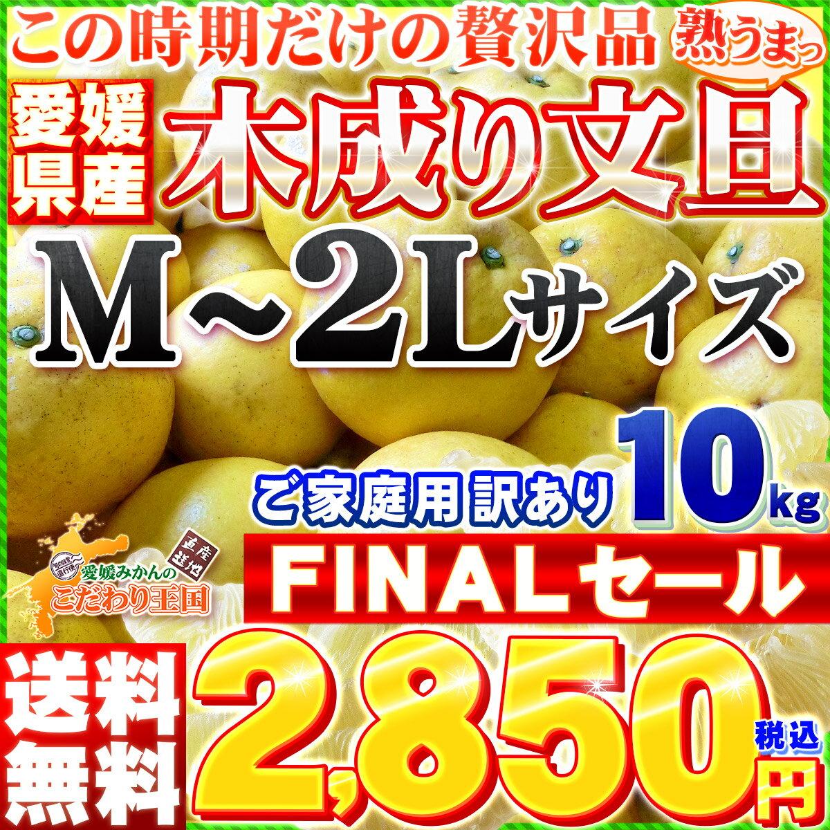 愛媛県産訳あり木成り文旦 M−2Lサイズ 10kg【送料無料※一部地域除く】