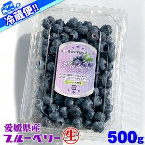 【クール冷蔵便】 愛媛県 宇和島産 生 ブルーベリー サイズ込み 500g 大きさ おまかせ 箱買い 500グラム