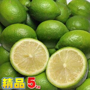 愛媛県産 精品レモン 5kg サイズ込み 送料無料 安心・安全の国産! 訳あり ではない見た目の綺麗な精品 皮まで使える【新鮮まる絞りストレート果汁ジュースはもちろんレモンケーキやレモ