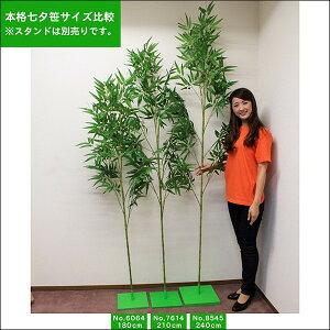 本格七夕笹リアル節(240cm)