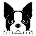 【100円offクーポン対象 7/19〜26まで】ボストンテリア 犬フェイスステッカー シルエットステッカー 車ステッカー 転…