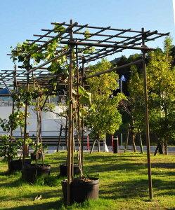 フルーツパーゴラ DX 幅1.8m×高さ2.0m×奥行3.0m F積水樹脂 【藤棚 ふじだな 葡萄 ぶどう つる 薔薇 バラ 植物 ガーデニング 棚 蔓性植物 屋根 庭園 庭 ガーデン日陰棚 ひかげだな つる棚 緑廊】