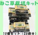 猫 犬 ねこ動画あり ねこ草栽培キット10個セット GFP0006 グリーンフィールドプロジェクト 猫草 おうちで簡単水…