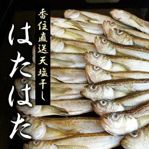 天塩干 はたはた 1kg (約19〜24尾入り) お歳暮ギフト魚 焼き魚 ハタハタ 鰰 惣菜 おかず お取り寄せ グルメ 送料無料