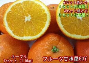 【セット】ネーブルオレンジ 訳あり 1セット1.5kg 熊本産 2セット購入で1セットおまけ!3セット購入で3セットおまけ! 60サイズ みかん ミカン 蜜柑