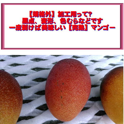 [完熟]宮崎マンゴー【規格外】加工用たっぷり2キロマンゴー【送料無料】一部の地域を除く