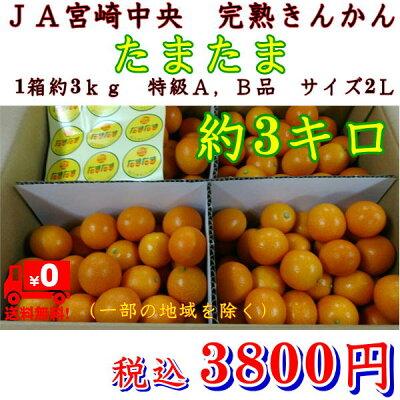 完熟きんかんたまたま1箱約3kg秀品サイズ2LJA宮崎中央【送料無料】一部の地域を除く