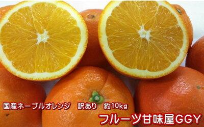 ネーブル熊本(網田産)訳あり・10キロ【送料無料】みかんネーブルオレンンジ