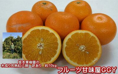 味自慢!坂本果樹園さんの木成り完熟紅八朔訳あり・10キロ【送料無料】