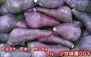 紅はるか 蔵出し 訳あり 箱込10キロ(9kg+保証分500g)さつまいも 蜜芋 熊本産サイズ 大・中・小【指定不可】【…