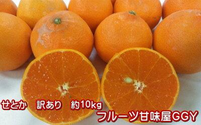 柑橘の大トロ!せとか熊本産熊本みかん訳あり10キロサイズ(3L〜S)【送料無料】一部の地域を除く