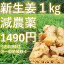 【1kg】【新生姜】掘りたて。減農薬 高知県産 産地直送 畑からご自宅までお届けします。送料無料※北海道、沖縄は別…