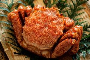 【ふるさと納税】冷凍ボイル北海道名産毛蟹(500g)1尾[15244694]