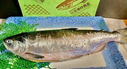 【ふるさと納税】旨味抜群!!甘塩紅鮭1尾切り身甘塩Ma305-A293
