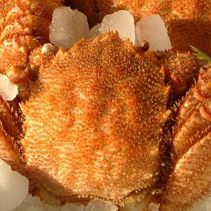 【ふるさと納税】冷凍ボイル毛がに 1尾(約400g)