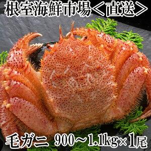 【ふるさと納税】ボイル毛がに900g〜1.1kg×1尾 B-14016