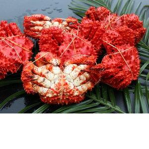 【ふるさと納税】[北海道根室産]花咲ガニ4〜6尾(計1.2kg) A-57037