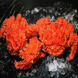 【ふるさと納税】浜ゆで花咲がに活時900g〜1.1kg前後×2尾 D-60010