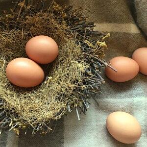 【ふるさと納税】[北海道根室産]自然農法美波里たまご6個×4P A-89003