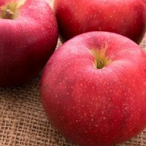 【ふるさと納税】【期間限定受付】北海道産りんご(紅将軍)