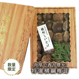 【ふるさと納税】《先行予約》北海道福島町特産・特選「横綱椎茸」500g