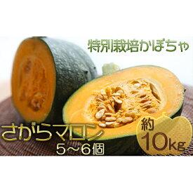 【ふるさと納税】北海道厚沢部産 特別栽培かぼちゃ さがらマロン 5〜6個 約10kg 【野菜】 お届け:2020年10月末〜2020年12月下旬頃まで