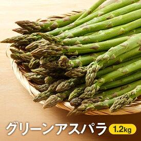 【ふるさと納税】北海道倶知安町【ニセコファーム】グリーンアスパラ1.2kg 【アスパラガス・野菜】 お届け:2021年6月上旬〜下旬まで