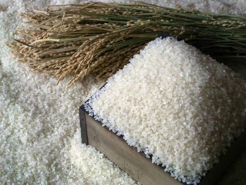 【ふるさと納税】「豊作米(R)」ななつぼし6か月コース(※平成30年12月〜発送予定)