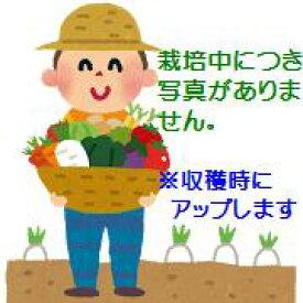 【ふるさと納税】伊藤農園の春掘り長いも(平成31年4月〜5月発送予定)(※詳しくは商品説明をご覧ください)