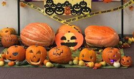 【ふるさと納税】賀集農産 ハロウィンかぼちゃ
